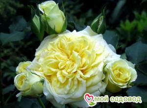 Роза Штернталер в Арамилье