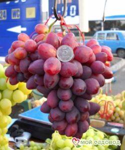 Виноград Дунав в Арамилье