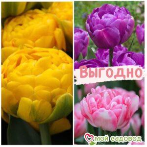 Красота в тройной выгоде! Только для любителей тюльпанов! в Арамилье