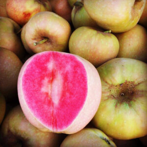 Яблоня Розовый жемчуг в Арамилье