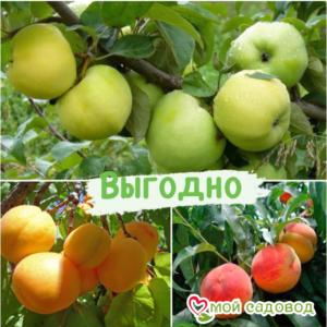Плодовые деревья Микс набор в Арамилье