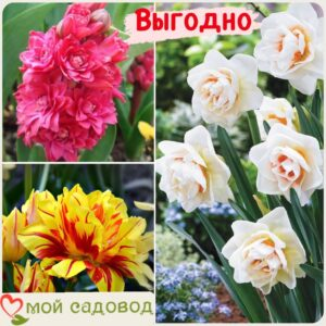 Весенний набор луковичных цветов в Арамилье